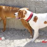 Marlon & Brando